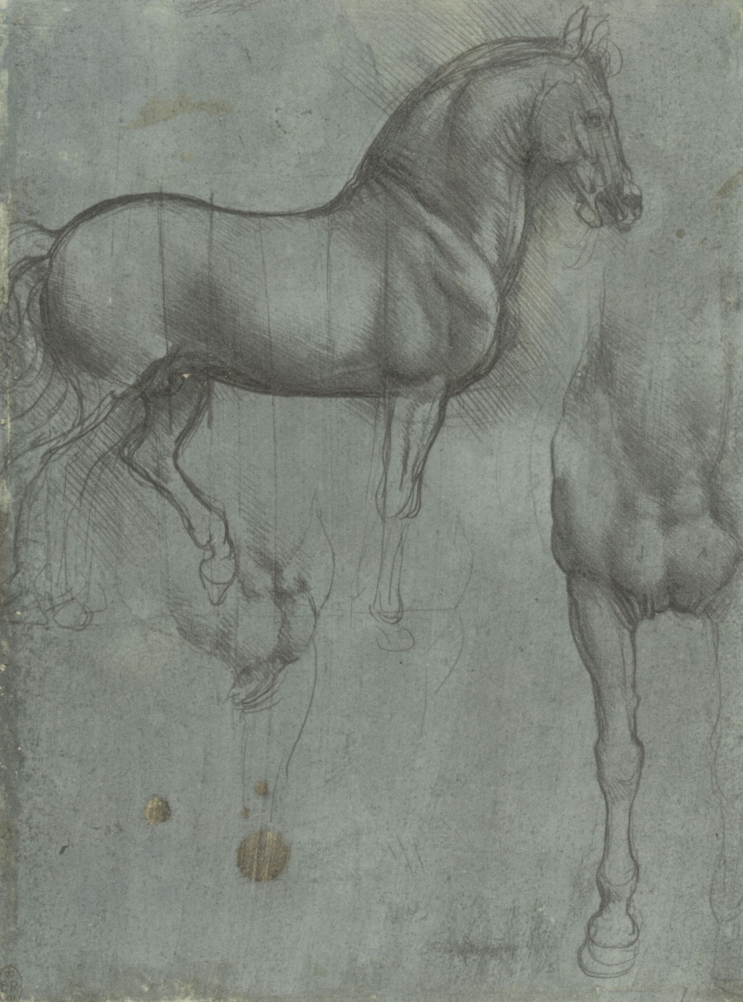 Leonardo da Vinci, Royal Collection, Windsor, c. 12321r/P92r Studio di cavallo visto di lato, di fronte e di tre quarti